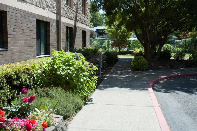 Walkway to the garden