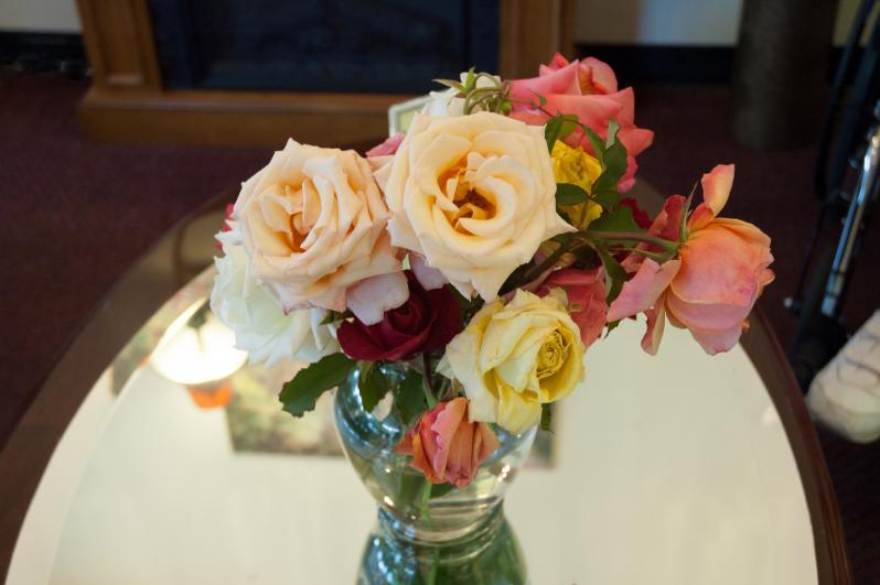 Roses from the Award Winning Garden