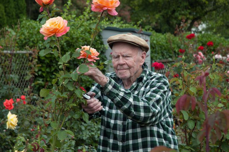 Award Winning Rose Garden