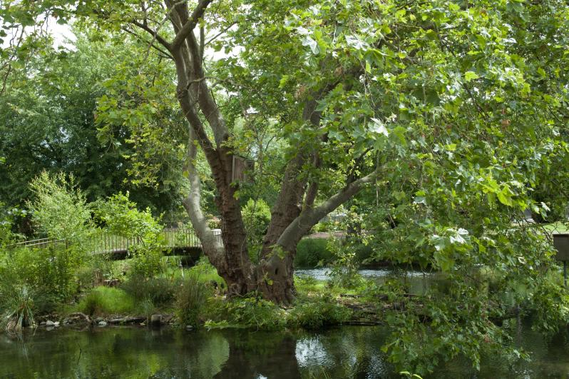 More Than Seven Acres of Magnificent Grounds