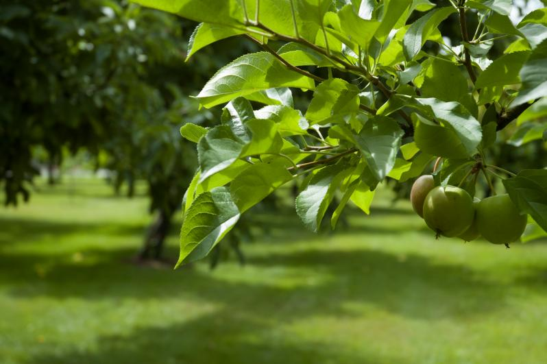 Resident Orchard